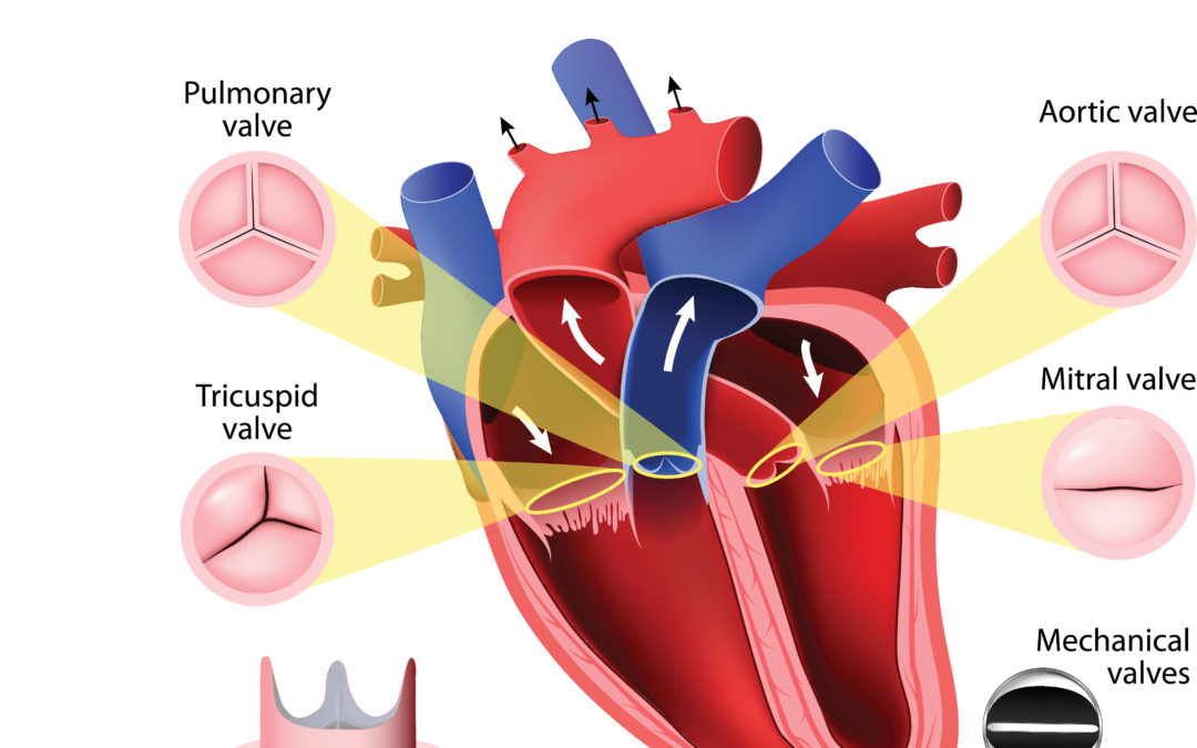 A Beginner's Guide to the Hearts Structure
